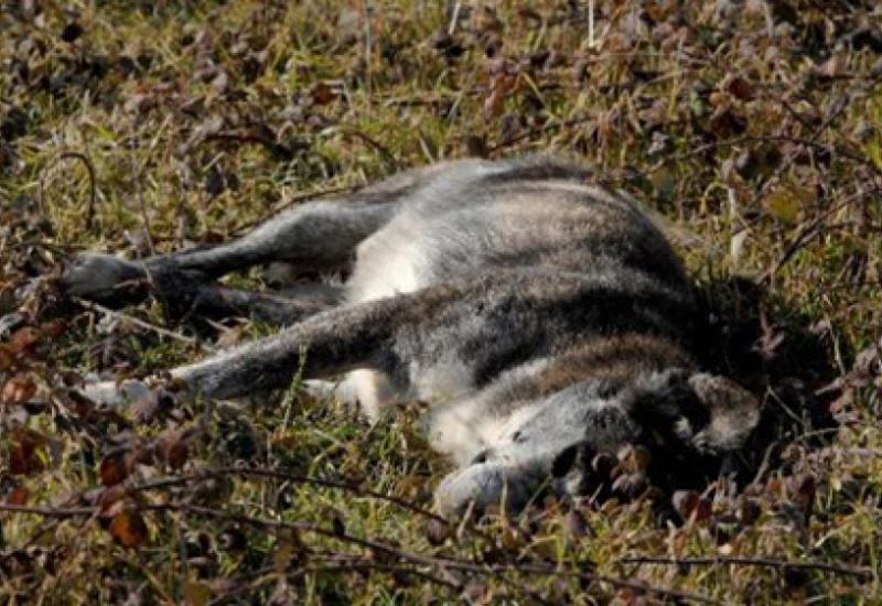 Ένα χρόνο φυλακή και πρόστιμο γιατί σκότωσε δύο σκυλιά